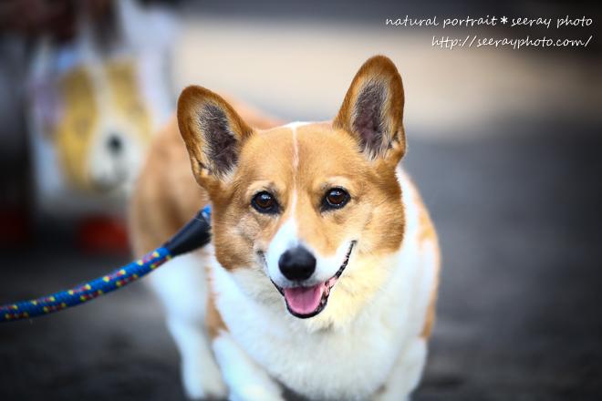 「余命1ヵ月の愛犬と、家族写真を撮ってください」vol.3 ~天国へのパスポート~