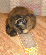 furry-cat-on-scratching-pad