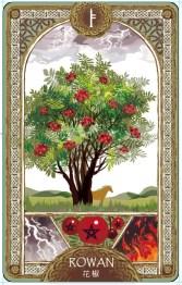 歐甘樹卡 (2) 花楸