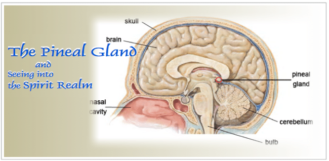 the pineal gland and the spirit realm seers see ministries