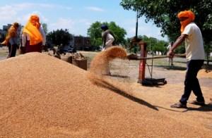 सरकारी एजेंसियों ने किसानों से एमएसपी पर खरीदे 190 लाख टन गेहूं