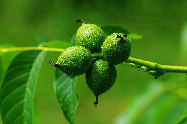 Zöld dió cukorban Séfbabér