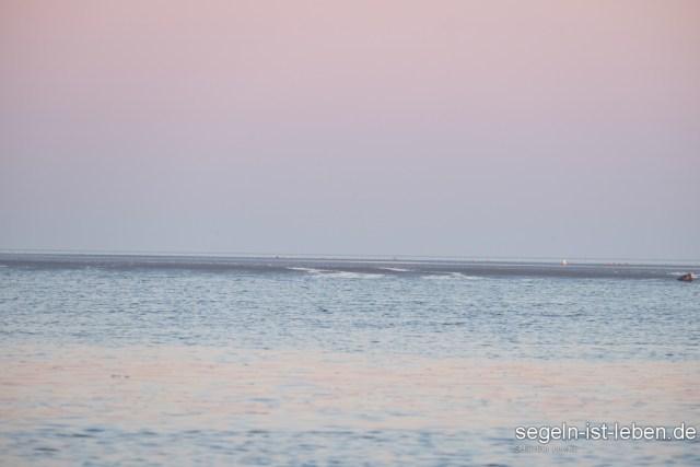 Morgen Wattenmeer Seehund