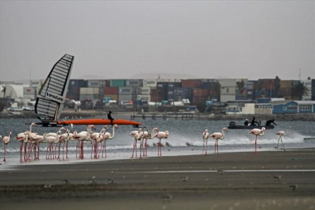 Speed Spot vor Flamingos in Namibia. © Sailrocket