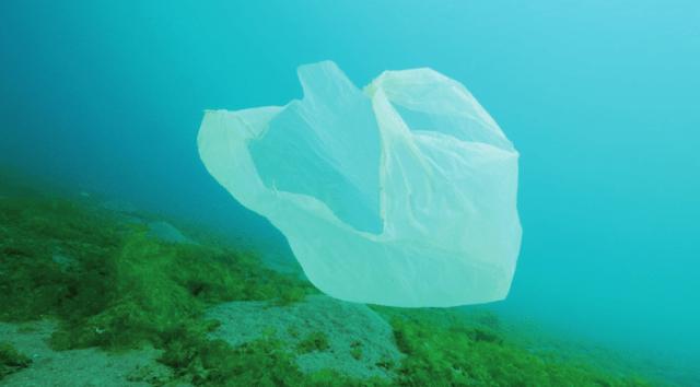 Plastikmüll, Meeresverschmutzung, Wale