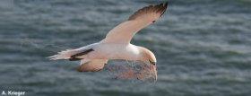Meeresverschmutzung, Plastikmüll, Wale