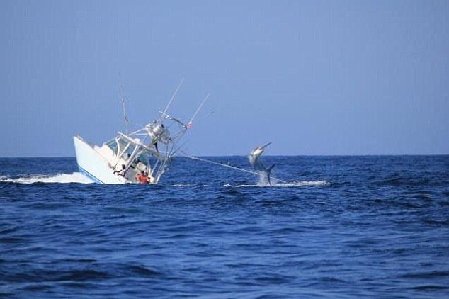 """Mit ein paar gekonnten Sprüngen und mit Hilfe einiger """"befreundeter"""" Wellen hebelte der Marlin die Angler aus © Marlins Mag"""