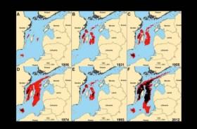 Rote Flächen zeigen geringen Sauerstoffgehalt, schwarz = kein Sauerstoff, totes Gewässer © FAZ/Jacob Carstensen