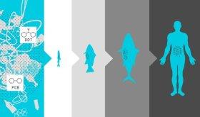 Fataler Kreislauf © oceancleanup