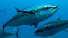 Eine Rumpffarbe, die von den Thunfischen abgeschaut wurde