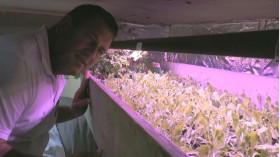 Und, wächst das junge Gemüse? © miceli