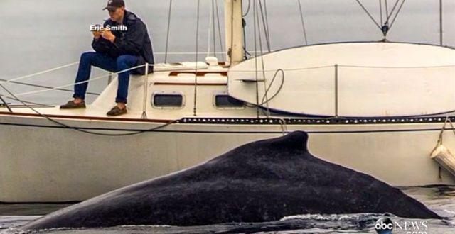 Versunken in die Welt des Mobilphones verpasst der Mann den seltenen Wal-Besuch. © Eric Smith