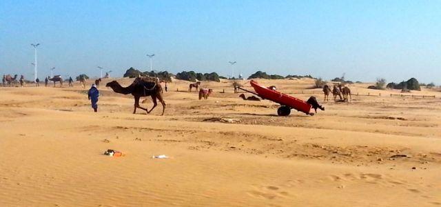 Dromedar, Kamel, Anhänger