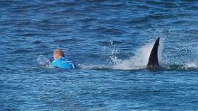 Surfer Mike Fanning macht im Juli Bekanntschaft mit einem großen Weißen.© WSL