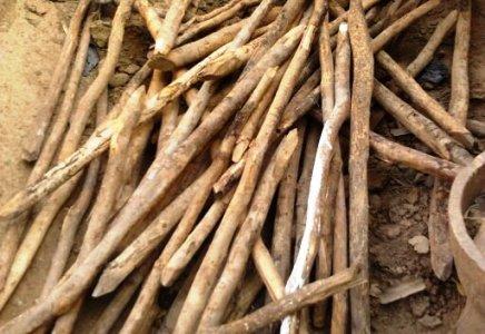 La déforestation et ses conséquences en milieu rural (3/4)
