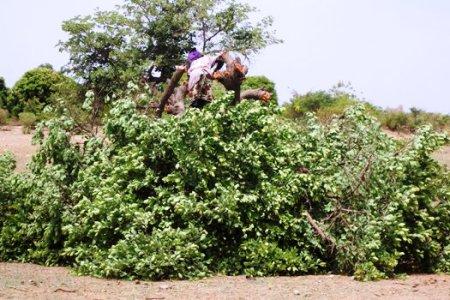 La déforestation et ses conséquences en milieu rural (1/4)