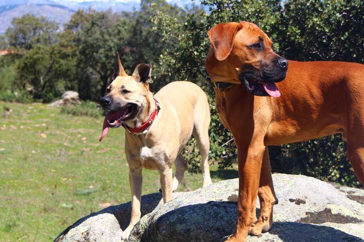 seguros para perros con adeslas