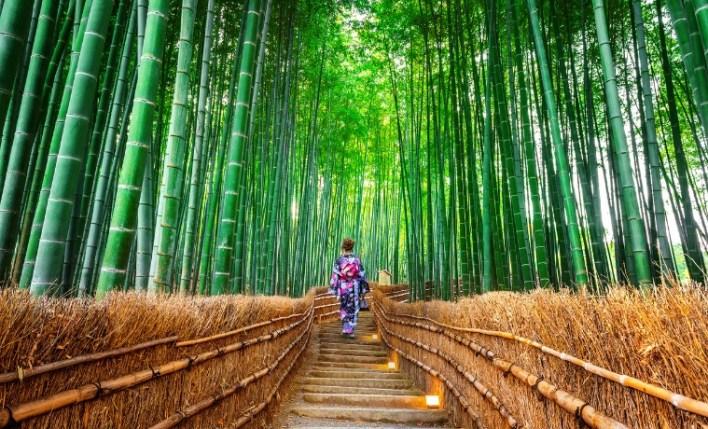 Seguro viagem para o Japão