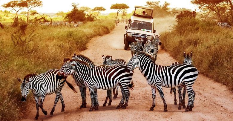seguro viagem para safari