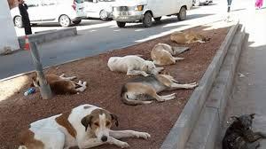 Photo of حملات لمكافحة الكلاب الضالة من محيط المدارس بالجيزة