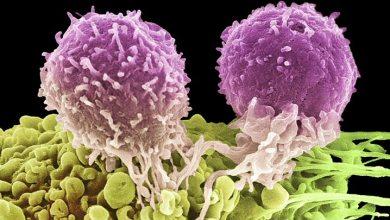 Photo of اكتشاف فقاعات صغيرة لعلاج السرطان توجه مباشرة إلى الأورام