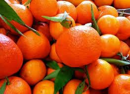 Photo of تعرف على 8 فوائد عظيمة لليوسفى وأصل إرتباط الفاكهة بهذا الاسم