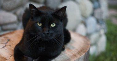 Photo of مزاعم شفاء لحوم القطط من كورونا وحملة شرسة على القطط السوداء فى فيتنام