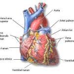 Hindari Penyakit Jantung Sejak Dini