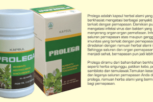 Herbal Saluran Pernafasan (srigunggu, pegagan, sambiloto)
