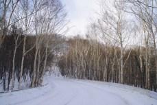 Street to Mt. Shirane