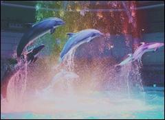 三峯神社のお守りの効果をMAXにする持ち方は?色や種類の違いは14