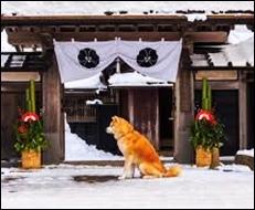 太秦映画村に盲導犬を連れて行ってもよいか?ペットの同伴は大丈夫?3
