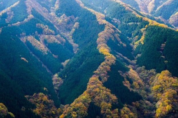 奈良県なめご谷の赤い竜