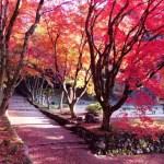 大阪から日帰りで!紅葉のメタセコイア並木と楽しめる周辺の観光スポットはココ!