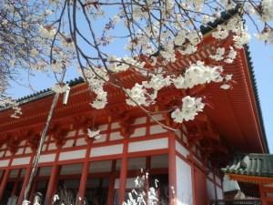 京都平安神宮の桜とライトアップ・イベント情報