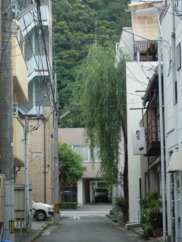 柳町 柳の木