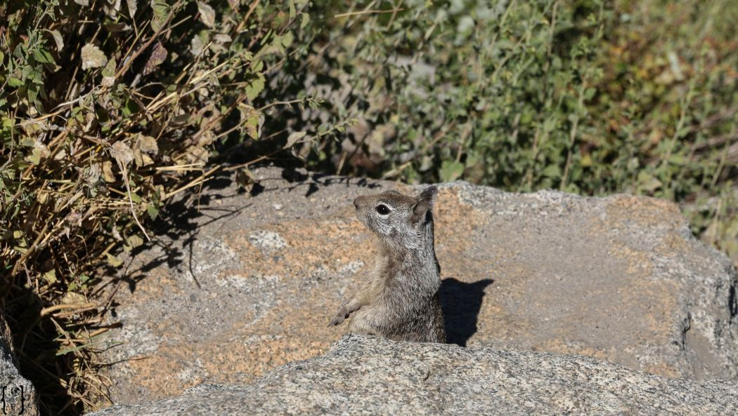 17 Squirrel Yosemite