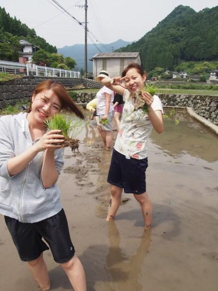Rice planting models