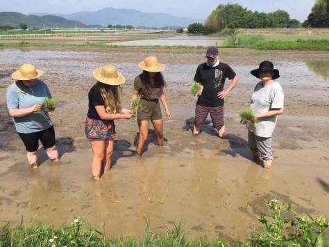 rice-planting - 6