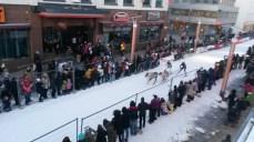 course de renne à Rovaniemi