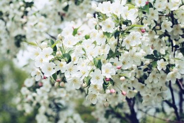 ひな祭り|折り紙で壁を飾り付け!簡単可愛い桃・梅・桜の花の折り方&切り方
