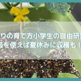 きゅうりの育て方小学生の自由研究に!苗を使えば夏休みに収穫も!