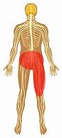 腰痛,右下肢の痛み