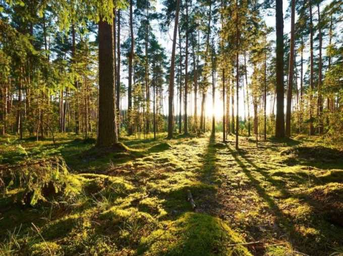 Contoh Teks Eksplanasi Tentang Lingkungan