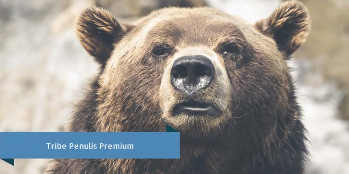 tribe penulis premium