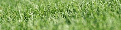 Penyakit Saham: Rumput Tetangga Lebih Hijau