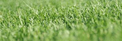 Penyakit Saham Rumput Tetangga Lebih Hijau