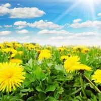 Rośliny bogate we flawonoidy, saponiny i garbniki