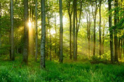 leczą drzewa drzew moc