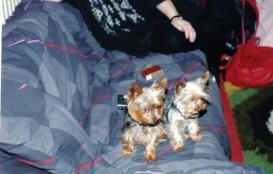 De hondjes van Rico